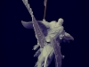Nocturna_StormGriffon03