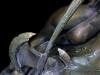 Conan statue_sacred bronze det4
